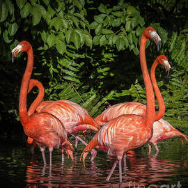 Flamingo Tropical Paradise 2 by Liesl Walsh