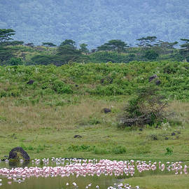 Flamingos at the Foot of the Mountain by Mary Lee Dereske