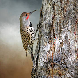 Flicker on a Pine by Donna Kennedy