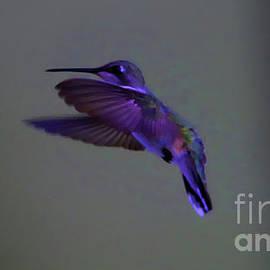 Flight of a hummingbird by Jeff Swan