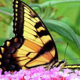 Float Like A Butterfly by Art By ONYX