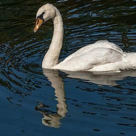 Floating Swan by Jean Noren