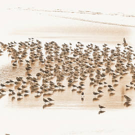 Flock Of Seagulls On Sandy Beach by Dee Browning