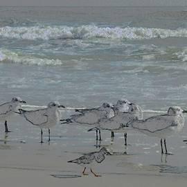 Flocking Gulls by Barbie Corbett-Newmin