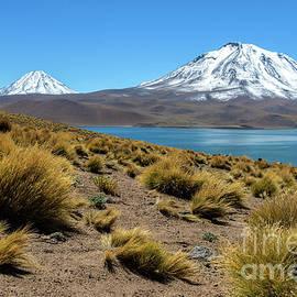 Flora of alpine Lagoon Miscanti in Atacama Desert by Jekaterina Sahmanova