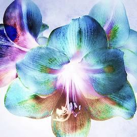 Floral Abstract $35 by Slawek Aniol