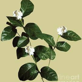 Floral bud White Flora withWhite Flora with Dark Leaves by Anita Morya