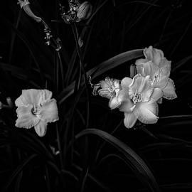 Floral Radiance by John Maslowski