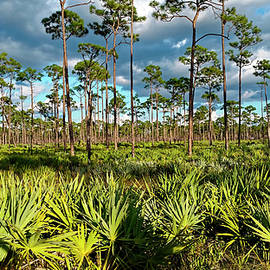 Florida Nature Scene by Sally Weigand