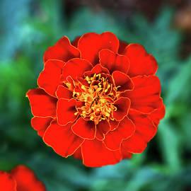 Flower Delight by A Zen Rose