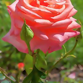 Flower Impression #5 by Dimitris Sivyllis