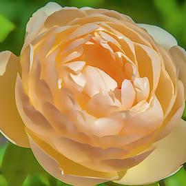 Flower Impression #7 by Dimitris Sivyllis