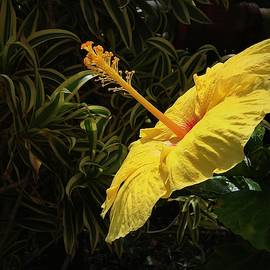 Yellow Flower In Love by Yuri Tomashevi