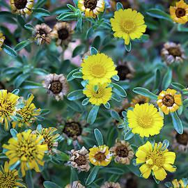 Flower Patterns Collection Set 01 by Az Jackson