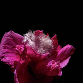 Flowerfeather by Bill Posner