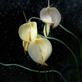Flowerography by Marilyn Cornwell