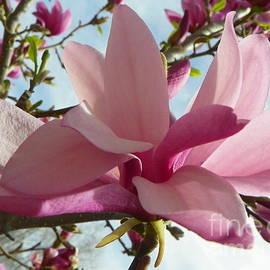 Art Sandi - Magnolia