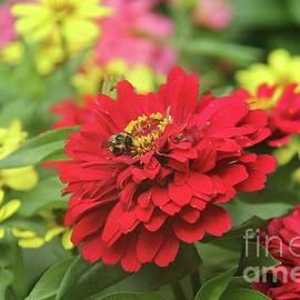 Flowers in Bloom by Ann Brown