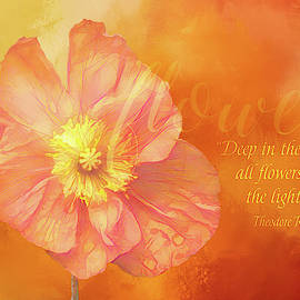 Flowers Keep the Light by Terry Davis
