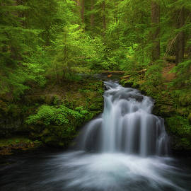 Flowing Through The Forest by Darren White