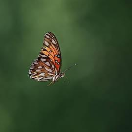 Flutter By by Stuart Harrison