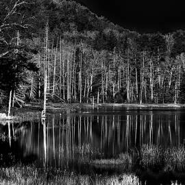 Fly Pond Reflection by David Patterson