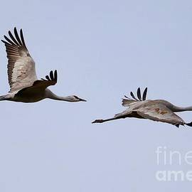 Fly With Two Sandhills by Carol Groenen