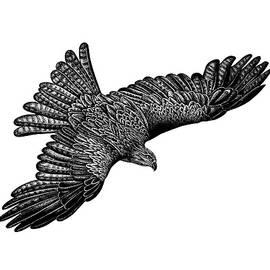 Flying black kite by Loren Dowding