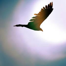 Flying into the sun by Liran Eisenberg