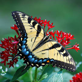 Butterfly Kisses by Marilyn De Block