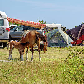 Foal Nursing at Campsite by Sally Weigand