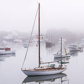 Marty Saccone - Foggy Cutler Harbor Maine