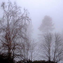Foggy Day The View  From The Flat3 by Clive Beake