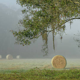 Foggy Elkton Morning With Hay Bales by Stacey Sather