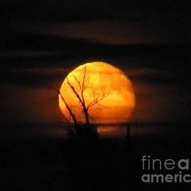 Foggy Harvest Moon by Barbara Henry