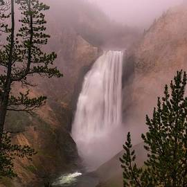 Foggy Morning in Yellowstone National Park by Jan Mulherin
