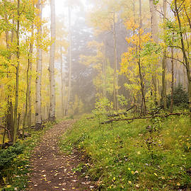 Foggy Winsor Trail Aspens In Autumn 2 - Santa Fe National Forest New Mexico by Brian Harig
