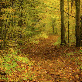Follow the Golden path by Thomas Miller