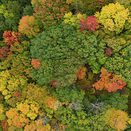 Forest Canopy Panorama by Steve Gadomski