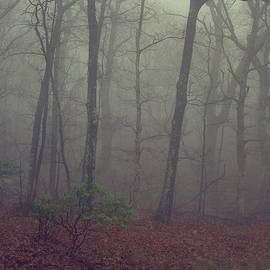 Forest Fog by Robert Clemens