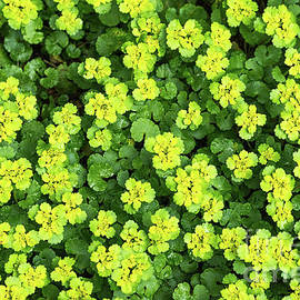 Forest Ground Cover - Yellow Flowers by Les Palenik