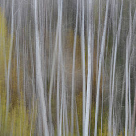 Forest Illusions- Aspen by Whispering Peaks Photography