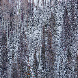 Forest in Winter by Donna Twiford