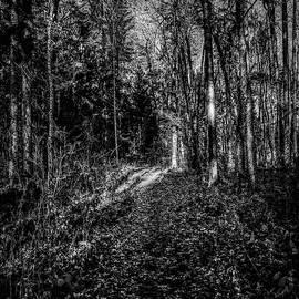 Leif Sohlman - Forest light BW #i1