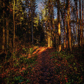 Forest light #i1 by Leif Sohlman