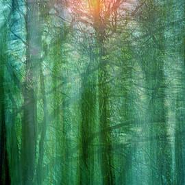 Forest Morning Dream by Augenwerk Susann Serfezi