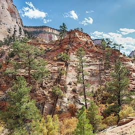 Forest On The Rocks by John M Bailey