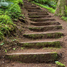 Forest Stairway by Robert Potts