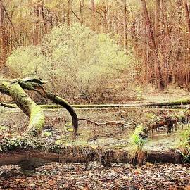 Slawek Aniol - Forest Tale #21