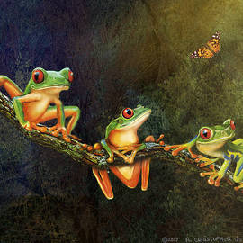 Forest Tree Frogs by R christopher Vest